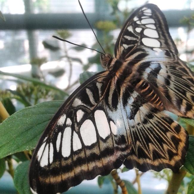 expozitie fluturi tropicali vii cluj