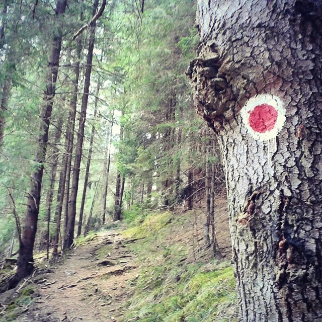 traseu punct rosu belis baraj padure poteca