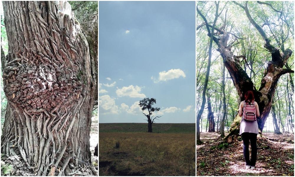 padurea mociar cea mai bătrână pădure