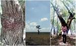 Pânze de păianjen prin cea mai bătrână pădure din țară [Adventure2017]