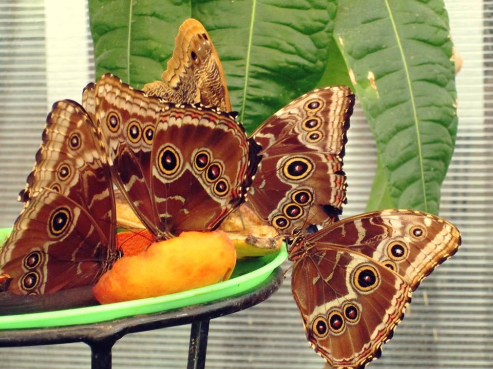 salina praid fluturi tropicali (2)