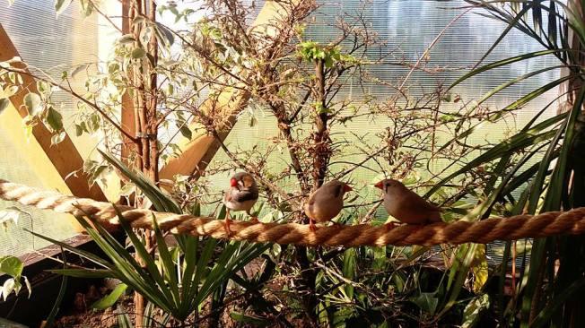 salina praid fluturi tropicali (3)